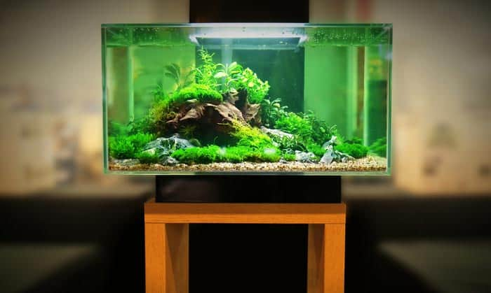 Best 10 Gallon Fish Tanks 2020