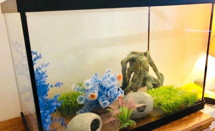 20-gallon-fish-tanks