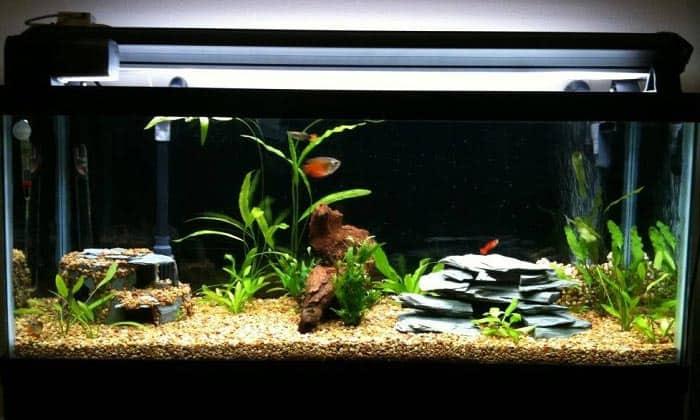 30-gallon-fish-tanks-01