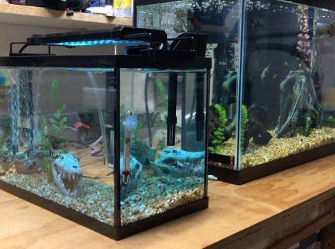 5 gallon fish tanks