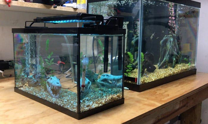 5-gallon-fish-tanks
