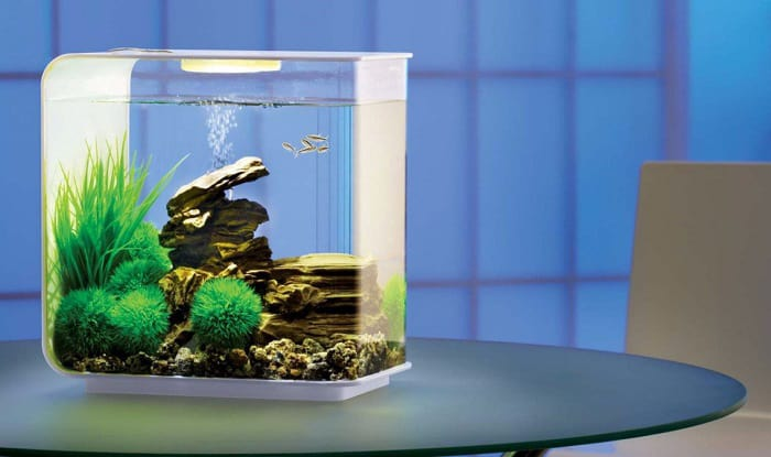 Acrylic-fish-tanks