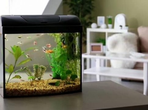 All-in-One-Fish-Tanks