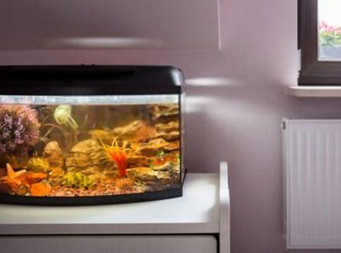 Fish-Tanks-for-Beginners