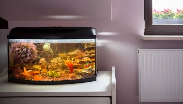 Fish-Tanks-for-Beginners