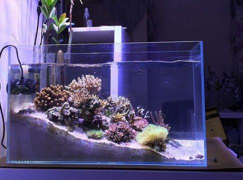 Nano-Reef-Fish-Tanks