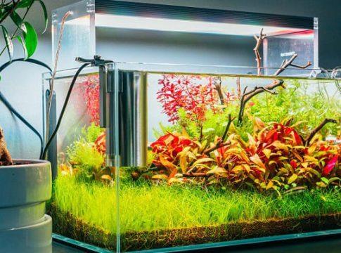 Nano-fish-tanks