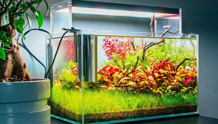 Nano-fish-tanks