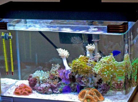 aquarium-filter-10-gallon