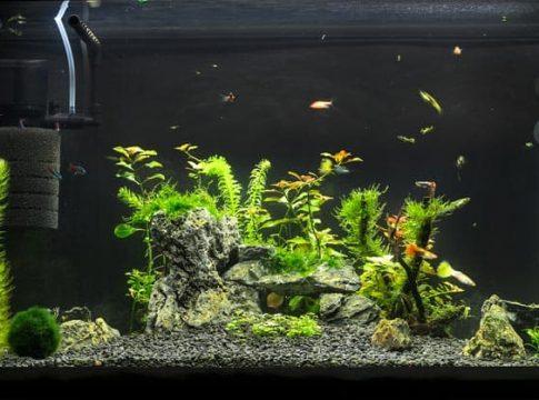 aquarium-filter-20-gallon