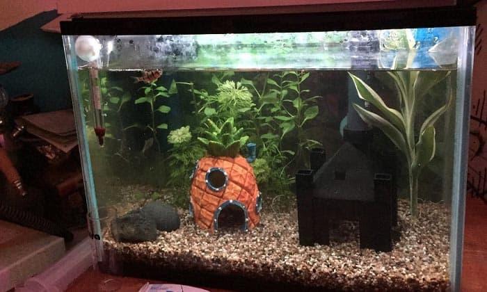 aquarium-light-timer