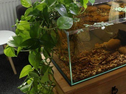 aquarium-plants-to-reduce-nitrates