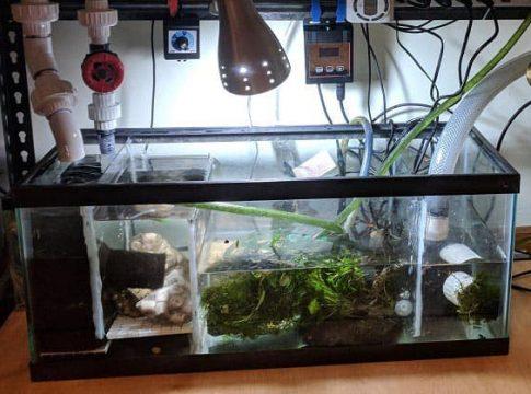 aquarium-sumps