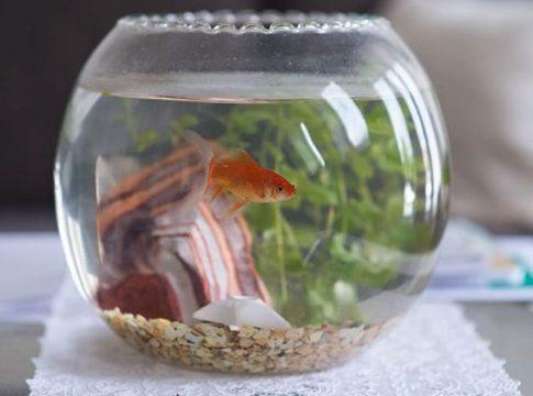 fish-bowls