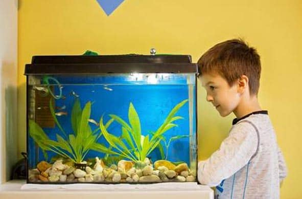 fish-tanks-for-kids
