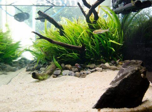pool-filter-sand-for-aquarium
