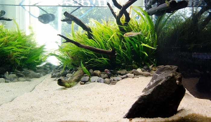 pool-filter-sand-for-aquarium