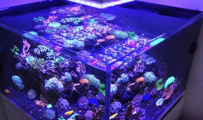 rimless-fish-tanks
