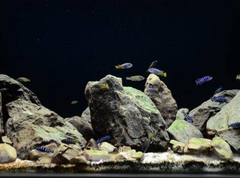 rocks-for-freshwater-aquarium