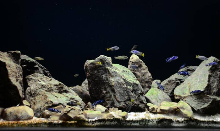 rocks-for-freshwater-aquarium