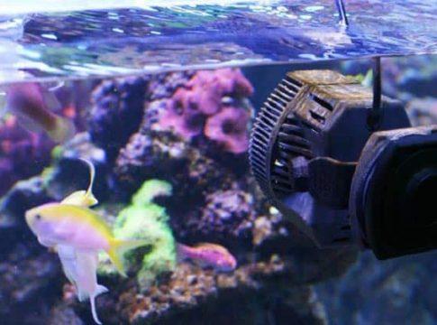aquarium-wave-maker