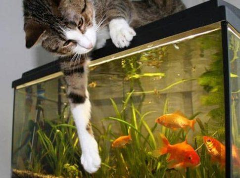 filter-for-goldfish