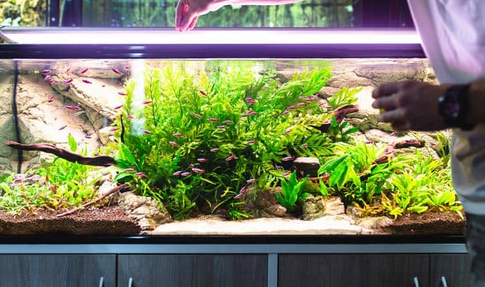 nitrate-remover-aquarium-cleaning