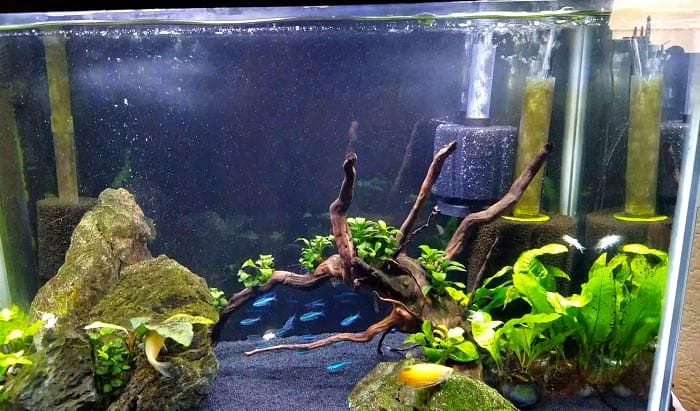aquarium-sponge-filter-01